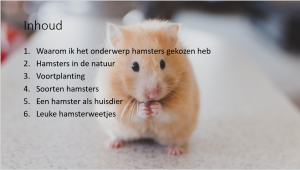 Hamster PowerPoint
